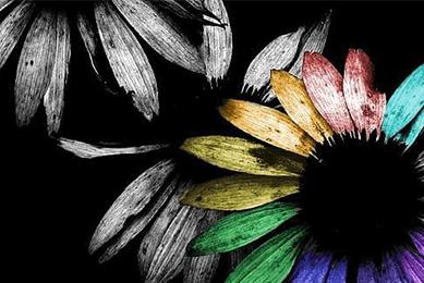 ЕКСПЕРТНА ОЦІНКА НЕМАТЕРІАЛЬНИХ АКТИВІВ, Оцінка торгового знака (кольорової і чорно-білої версії) для продажу