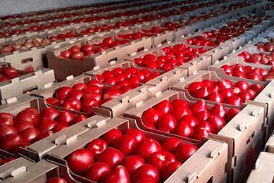 оценка машин и механизмов, Оценка товаров в обороте (помидоры) для таможни