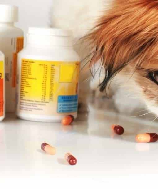 Послуги у сфері ТЦУ, Підготовка звіту по контрольованих операціях для виробника ветеринарних препаратів